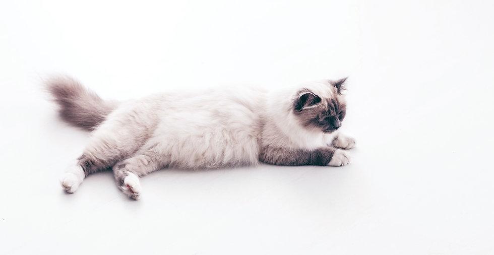 Cat%20Lying_edited.jpg