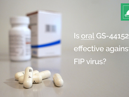 Should I Choose Pills or Injections to Treat FIP?