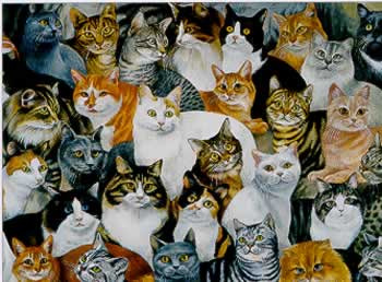 ¡1000 gatos salvados del programa Cure FIP!