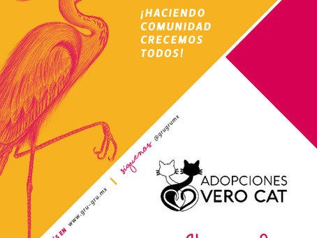 ¿Ya conoces el albergue VeroCat? ¡Gru Grú se une a la causa para ayudar a los gatitos rescatados!
