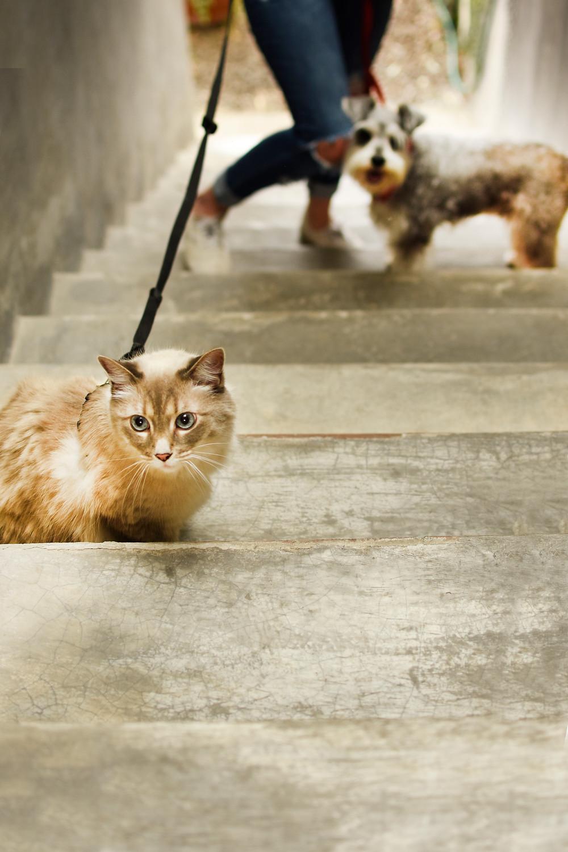 Cada año aumenta un 20% los animales que habitan en la calle