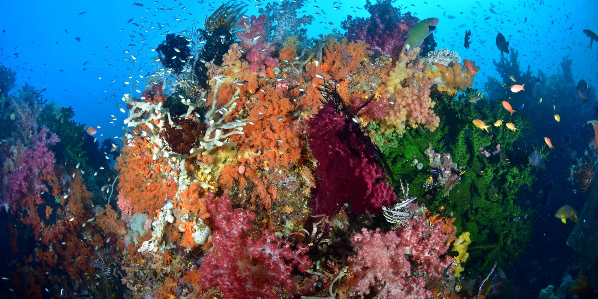 Mebios Tauchreisen, Meeresbiologische Se