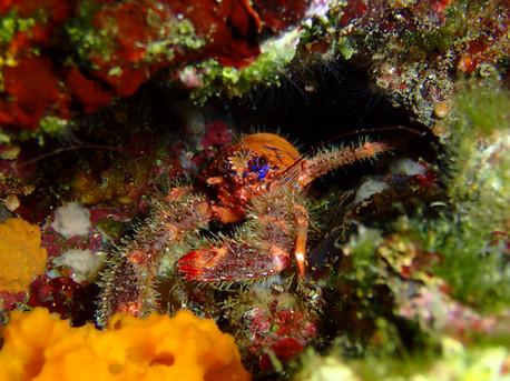 Tauchen Insel Cres, Beli, Mebios-Tauchreisen, Meeresbiologische Seminare