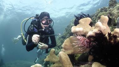Alexander Heidenbauer, Mebios-Tauchreisen, Meeresbiologische Seminare, Meeresbiologische Kurse