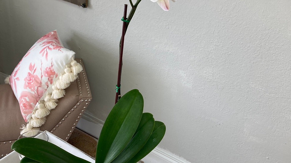 Marble orchid planter