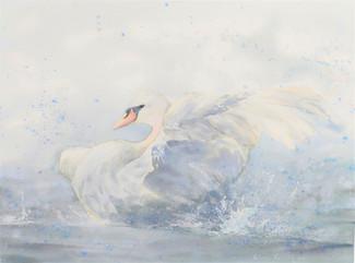 """The swan I"""