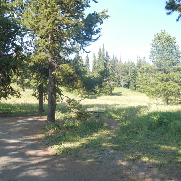 Yellowstone Dunraven Picnic Area.JPG