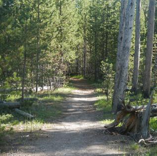 Purple Mountain Trailhead In Yellowstone National Park