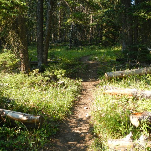 Yellowstone Warm Creek Trailhead.JPG