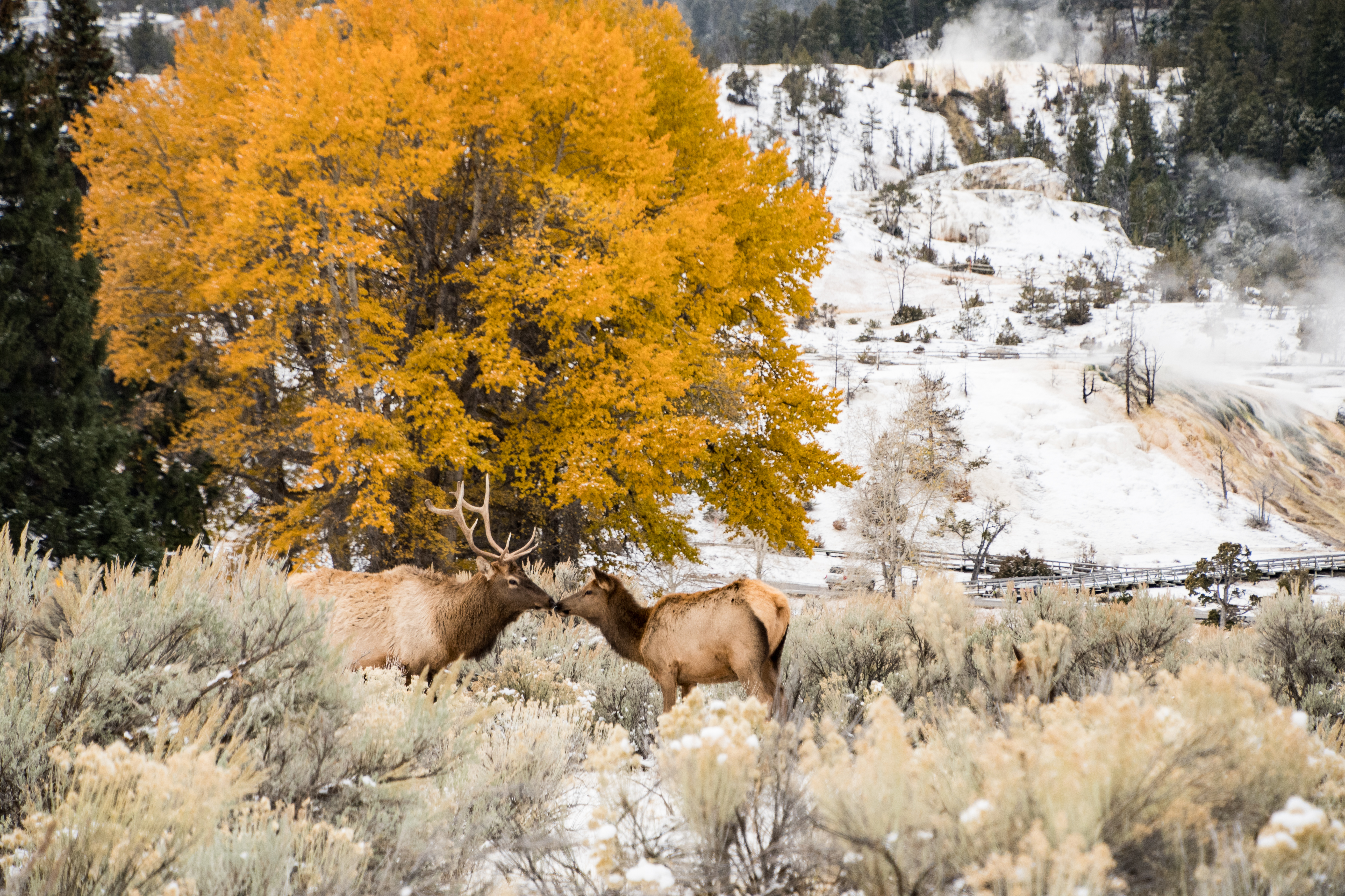 Autumn at Mammoth Hot springs 2 (1 of 1)