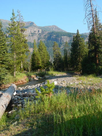 Pebble Creek Campground Stream.JPG