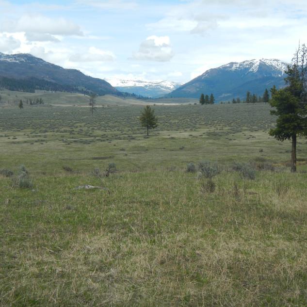 Slough Creek valley.JPG