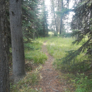 Yellowstone Picnic Area Trail.JPG