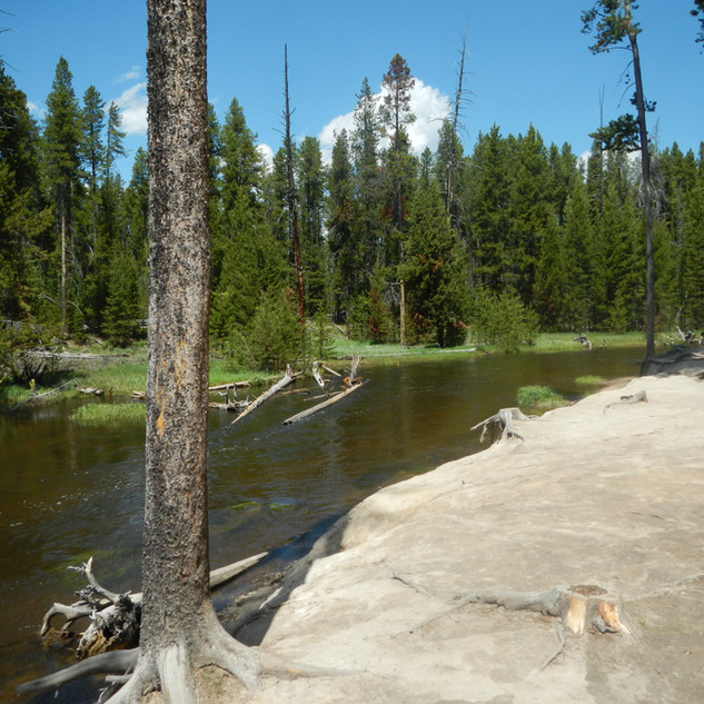 Yellowstone Gibbon Meadows Picnic Area.J