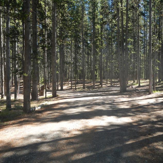 East Divide Picnic Area Road.JPG