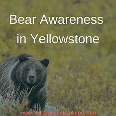 Resources Bear Awareness in Yellowstone.