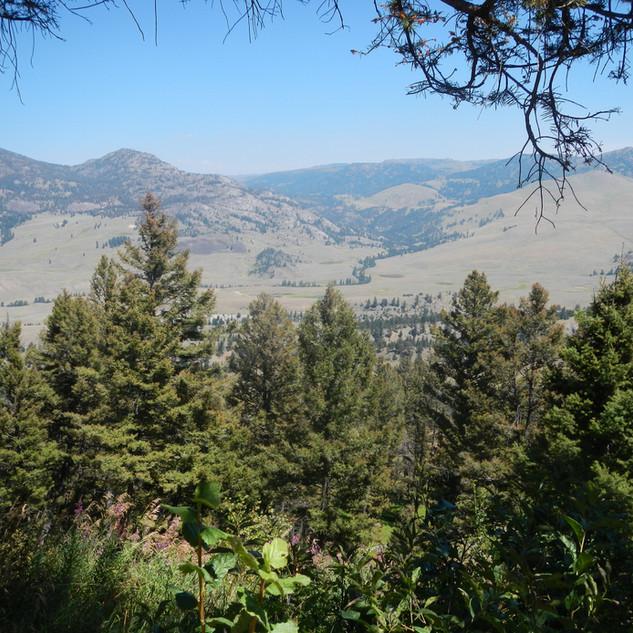 Scenic View.JPG