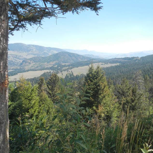 Scenic View Yellowstone.JPG