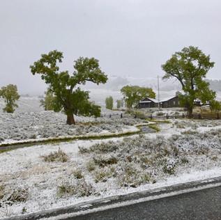 Lamar Buffalo Ranch Spring.JPG