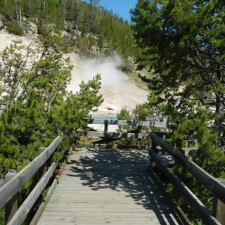 Beryl Spring Board walk.JPG