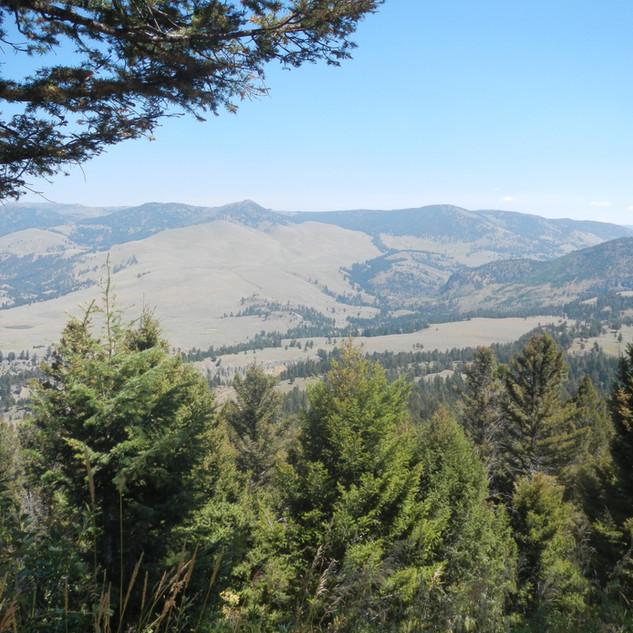 Scenic View YNP.JPG