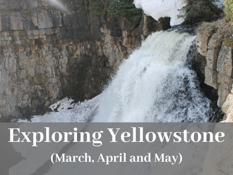 Top Things to do In Yellowstone During the Months of March, April and May