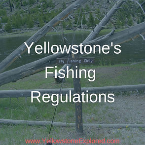 Resources Yellowstone Fishing Rules and