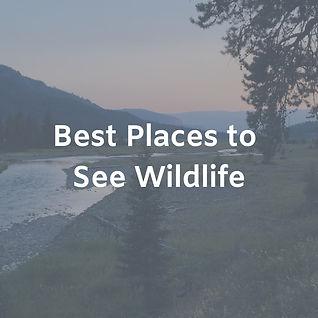 Best Places to See Wildlife.jpg