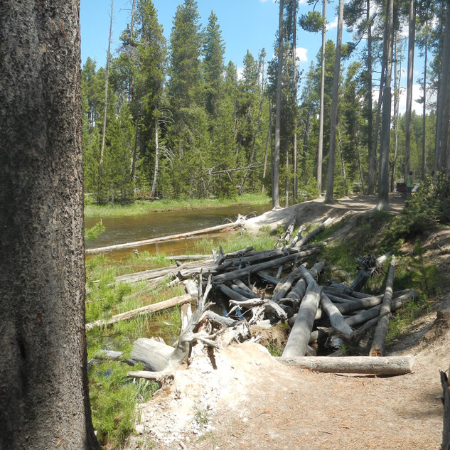 Gibbon Meadows Picnic Area Yellowstone N