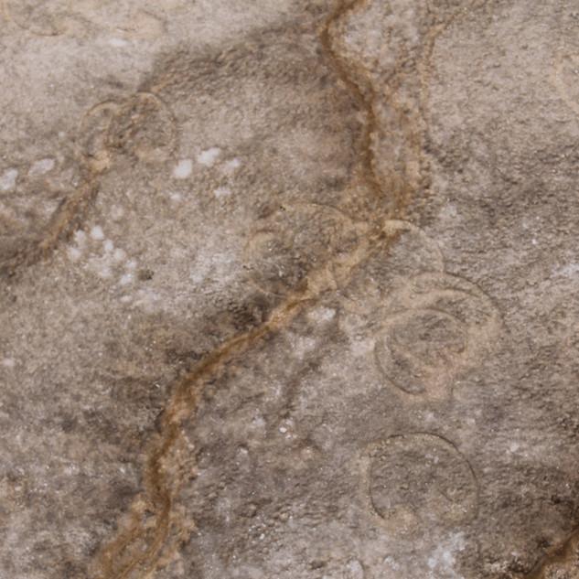 Grand Prismatic Spring Bison Tracks.JPG