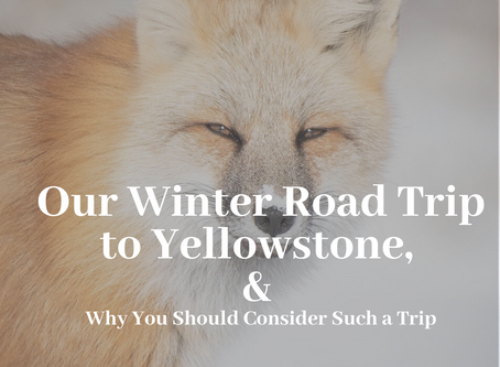 Our Winter Road Trip to Yellowstone, and Why You Should Consider Such a Trip