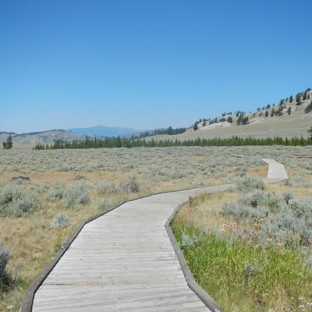 Self Guiding Trail Board Walk.JPG