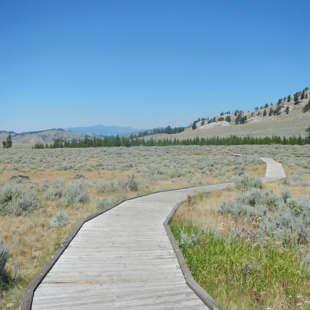 Self Guiding Trail Board Walk.JPG
