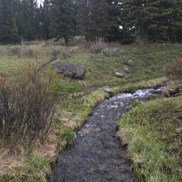 Yellowstone Trout Lake Stream.JPG