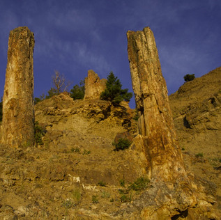 Petrified Forest trailhead.jpg