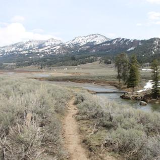 Lamar River Trail.JPG