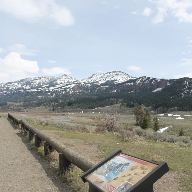 Lamar River Trailhead View.JPG