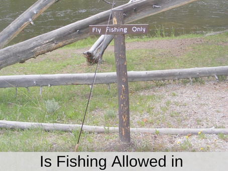 Is Fishing Allowed in Yellowstone National Park?