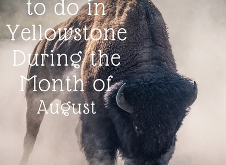 Top Things to do in Yellowstone During the Month of August