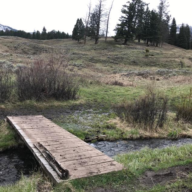 Trout Lake Path Yellowstone.JPG