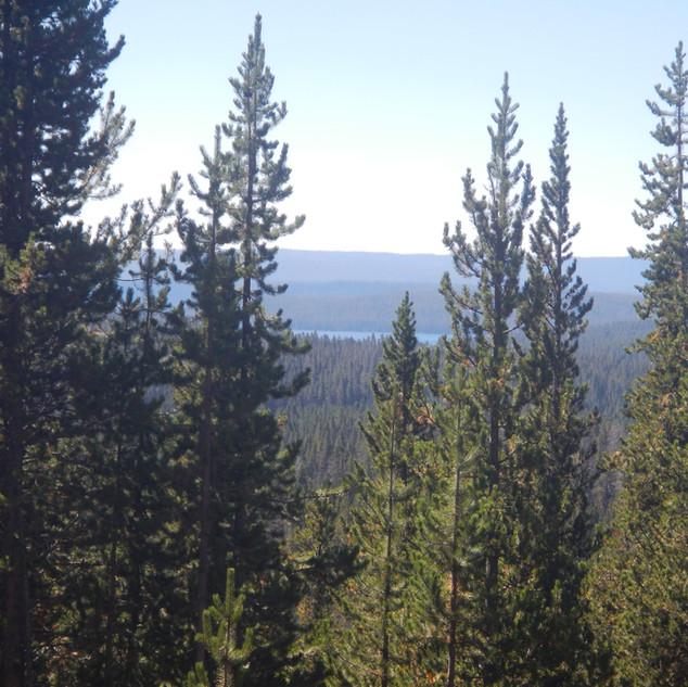 Shoshone Lake.JPG