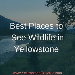 Resources Best Places to See Wildlife Ye