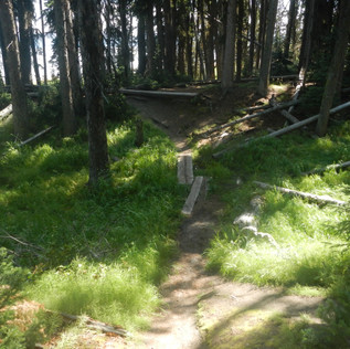 Sand Point Picnic Area Trail.JPG