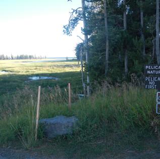 Yellowstone Pelican Valley Creek Trailhe