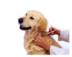 חיסון כלבים- כל שנתיים בלבד!