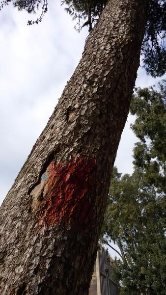 סכנת עצים בגן-טיול