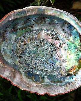 abalone-4919586.jpg