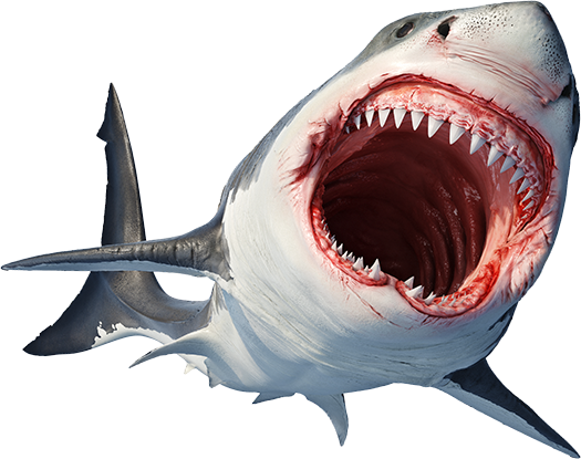 Great white_for_web.png