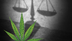 Legalized adult-use cannabis + absolute liability Scaffold Law = ?