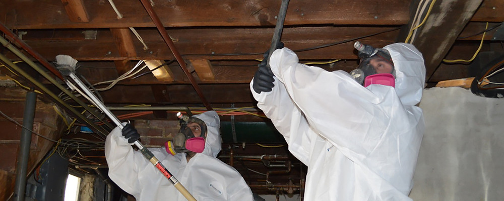 looking-for-the-right-mold-removal-franchisor